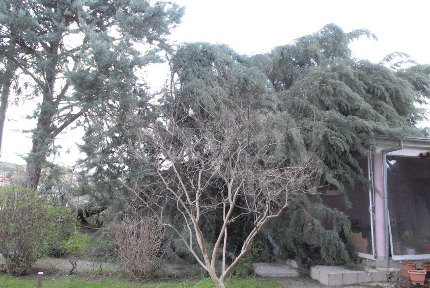 Ο αέρας έριξε δέντρο πάνω σε στέγη σπιτιού στη Διάβα Καλαμπάκας -Πτώση δέντρου και στην Αγναντιά -Ζημιές και στο Καστράκι